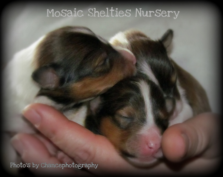 Mosaic Babies   Photo taken by Chance Photography Canada
