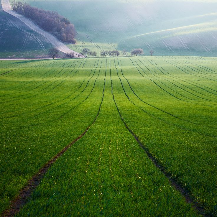 Green Heaven - )