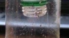 Wespenfalle aus PET-Flasche