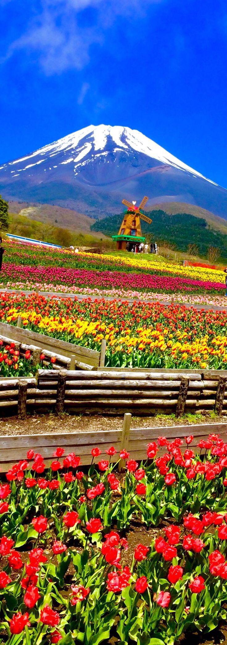 Mt.Fuji and tulip