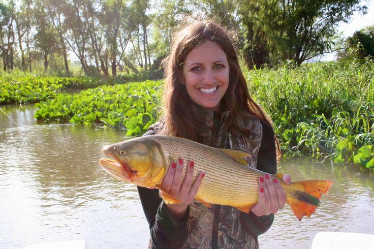 Golden Dorado on the Parana River, Argentina with TGB Outfitters