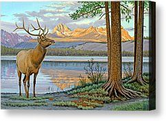 Elk in the Sawtooths Canvas Print by Paul Krapf