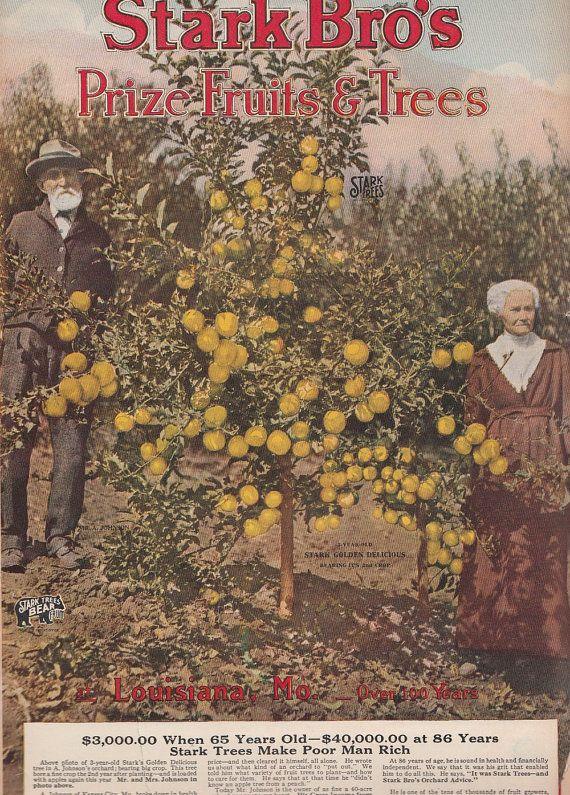 1923 Prize Fruits & Trees Catalog Stark Brothers Nurseries Louisiana MO
