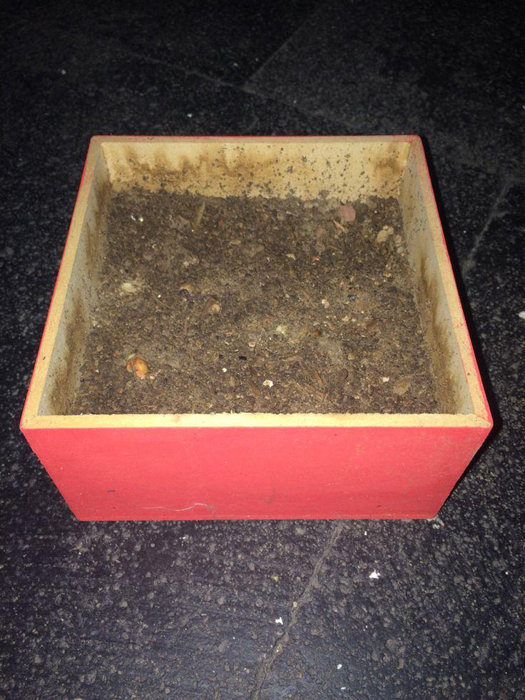 Hace una semana y media se plantaron 4 semillas de frijol y estamos por ver cual de ellas es la que crece con exito.  Male Hdz  14/05/2015