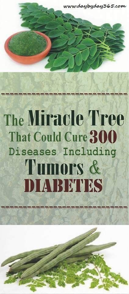 Repin !! - THE MIRACLE TREE THAT COULD CURE 300 DISEASES INCLUDING TUMORS AND DIABETES