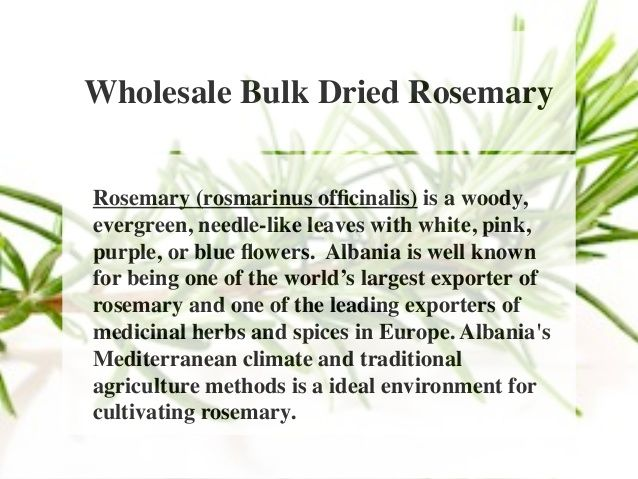 Wholesale Bulk Dried Rosemary  Rosemary (rosmarinus officinalis) is a woody,  evergreen, needle-like leaves with white, pi...