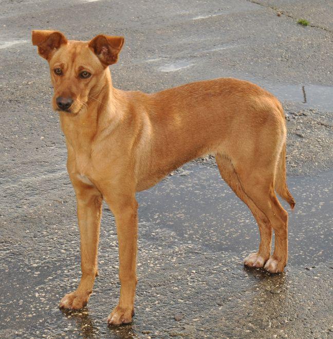 Perdida, de 'verloren' hond. Lees het verhaal van Perdida op https://zininportugal.wordpress.com/2015/03/29/perdida-de-verloren-hond/
