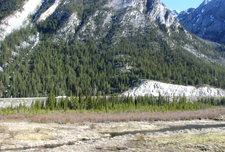 From the Rocky Mountaineer, Canada - can you see the Moose?