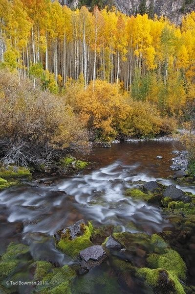 In Colorado there is never an absence of color. Here you see some lovely aspens in the fall season.  #colorado