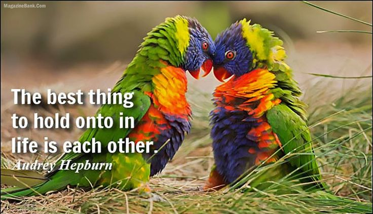 Top Latest Quotes About Life and Love With Images | SMS Wishes Poetry