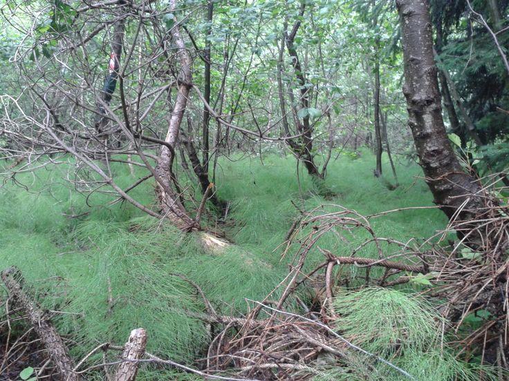 Kindom of Horsetail, North Slovakia