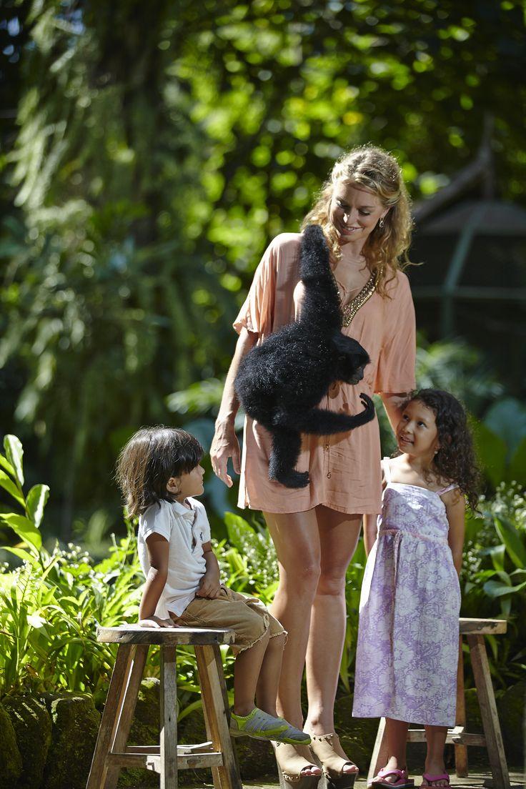 Animal encounter with Siamang Gibbon at Bali Zoo