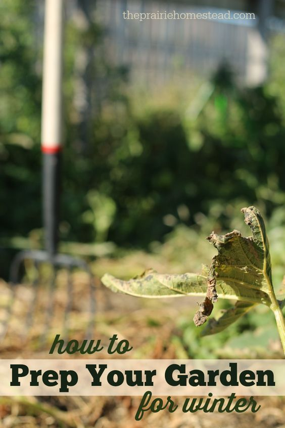 Clean Up Your Fall Garden and Give it a Boost for Next Year