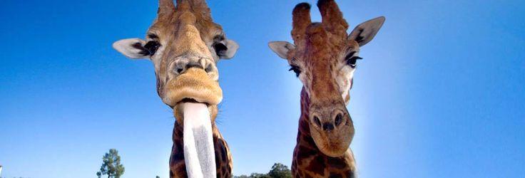 Taronga western plain zoo