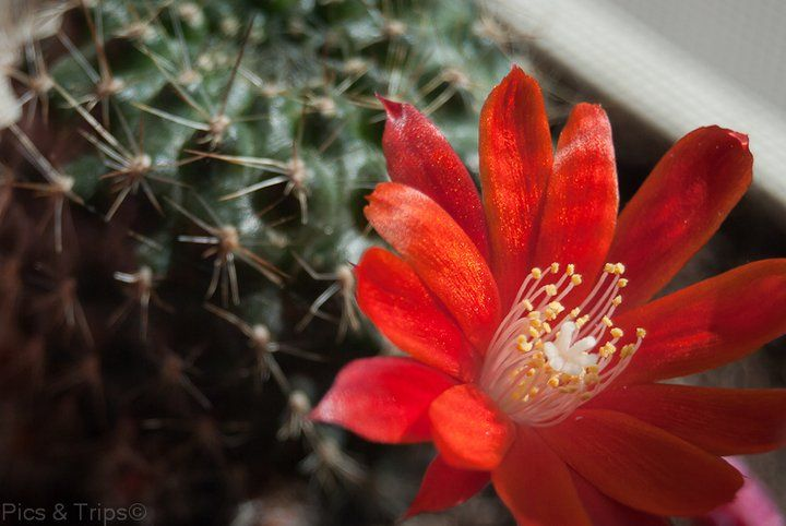 Uno dei miei cactus