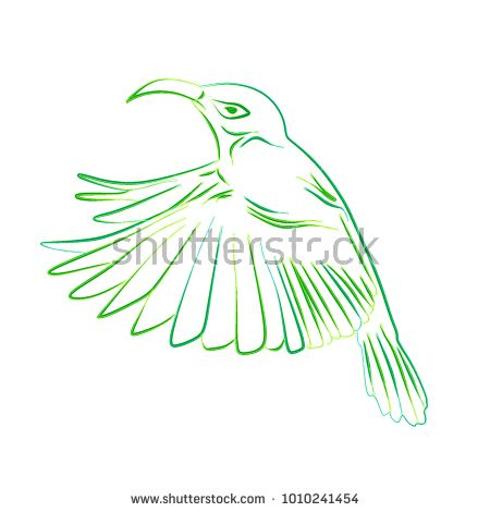 Hand drawn illustration vector Humming bird, Colibri line art with water color. Isolated in white background.