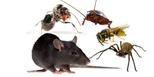 Best Office #Pest Control #Service in sydney