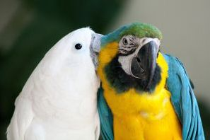We are a not-for-profit, no-kill parrot rescue, rehabilitation, education and adoption shelter.