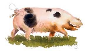 oxford sandy and black pig - Bing images