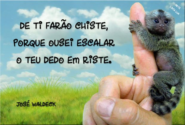 José Waldeck. O menor primata do mundo, o sagui pigmeu.
