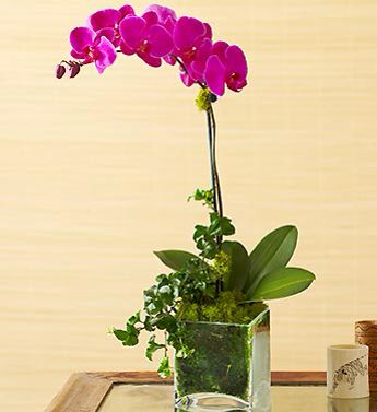 flowers decorations for weddings best 25 potted orchid centerpiece ideas on 4257
