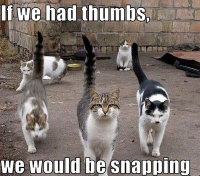 funny cat meme of five cats walking and the caption if we had thumbs, we would be snapping