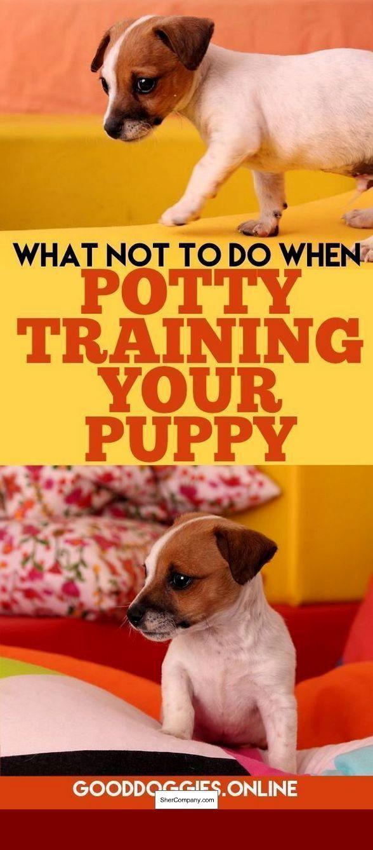 Dog Toilet Training – The Best Method