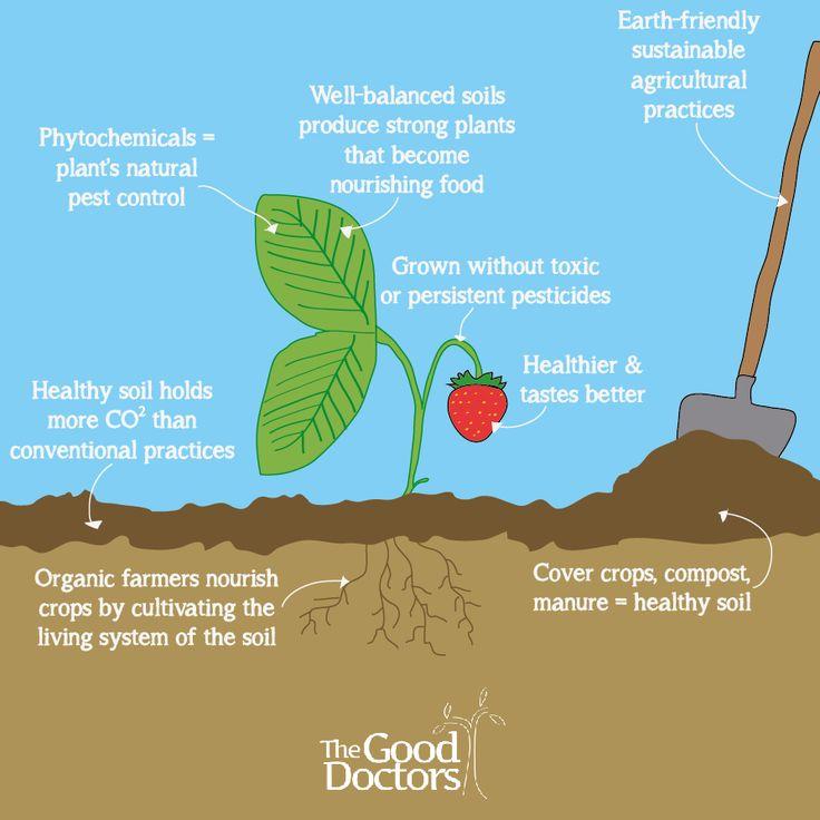 Get the dirt on organic