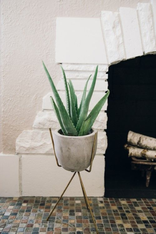 aloe on a vintage plant stand