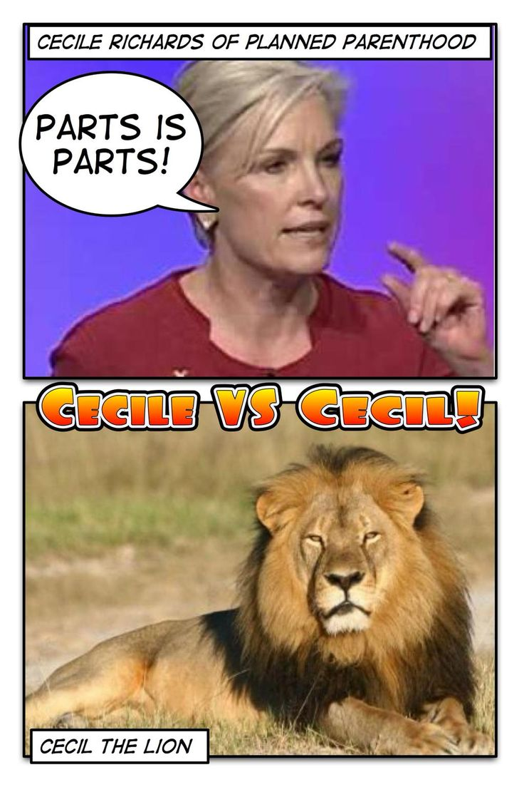 17 best images about abortion is murder god cecile vs cecil vote now who deserves the most attention