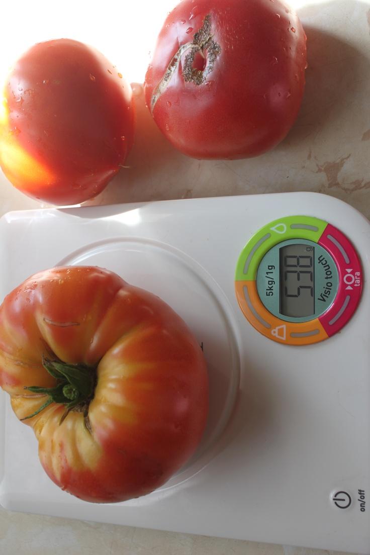 Август. Крупноплодные томаты.