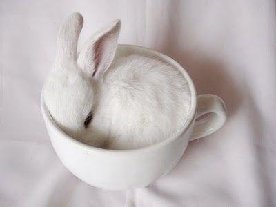 cup o' bunTeas Time, Sweets, Teas Cups, Easter Bunnies, Baby Bunnies, Baby Animal, Drinks, Teacups, White Rabbit