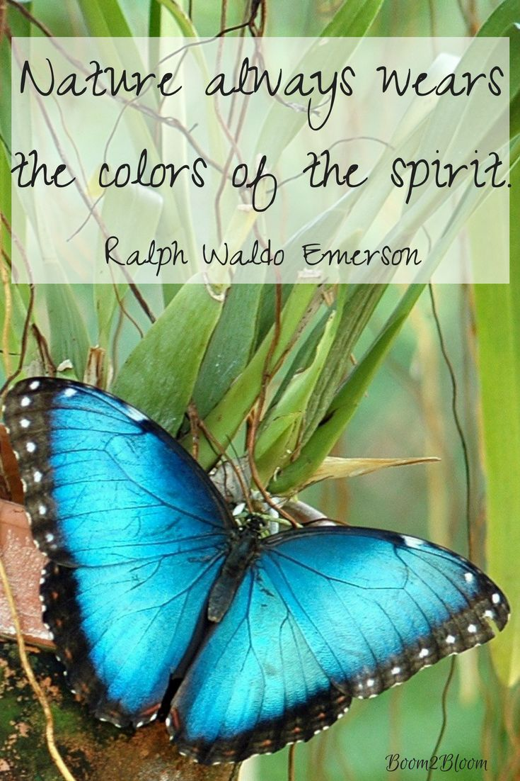 Nature always wears the color of the spirit. Quote by Ralph Waldo Emerson. Nature Quotes. #Nature #NatureQuotes #Emerson #Butterfly
