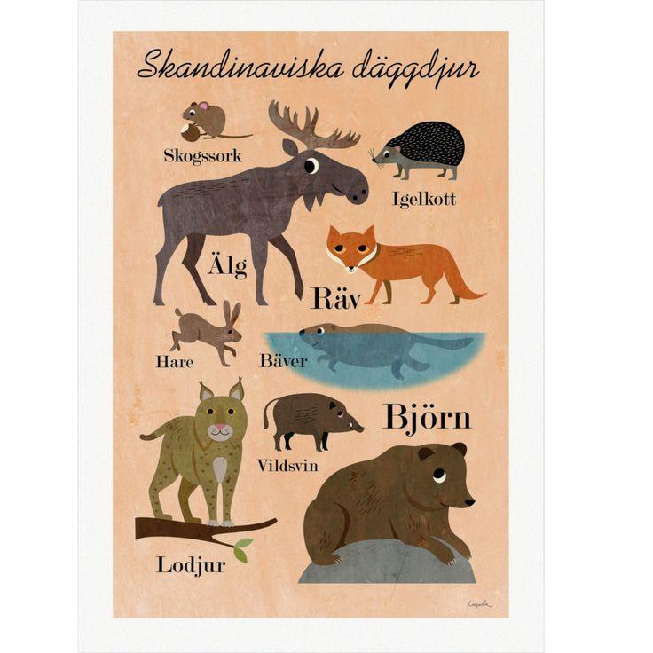 Modelmini - Poster- Skandinaviska djur 50x70