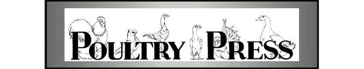 Standard Breed Poultry for sale