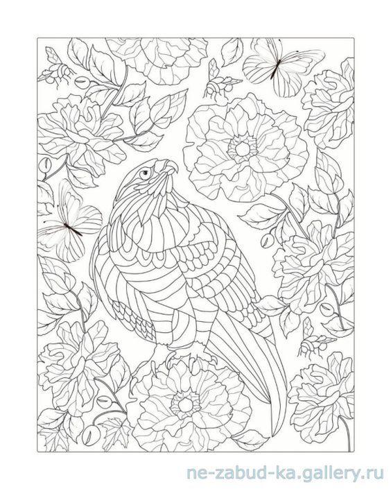 131 best coloring birds of prey images on Pinterest