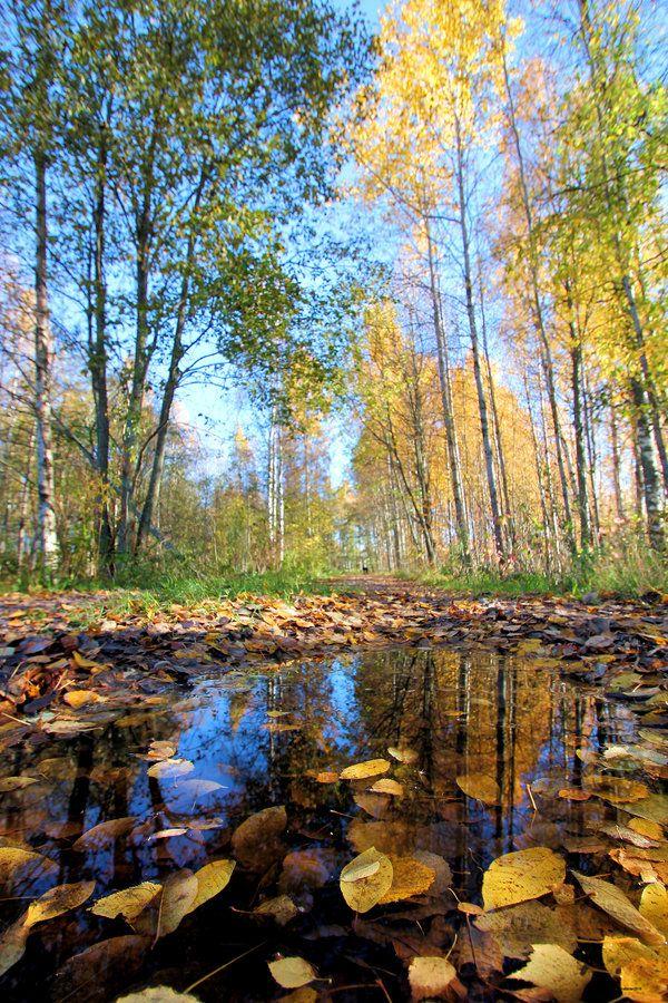 Beautiful autumn path. by KariLiimatainen on DeviantArt