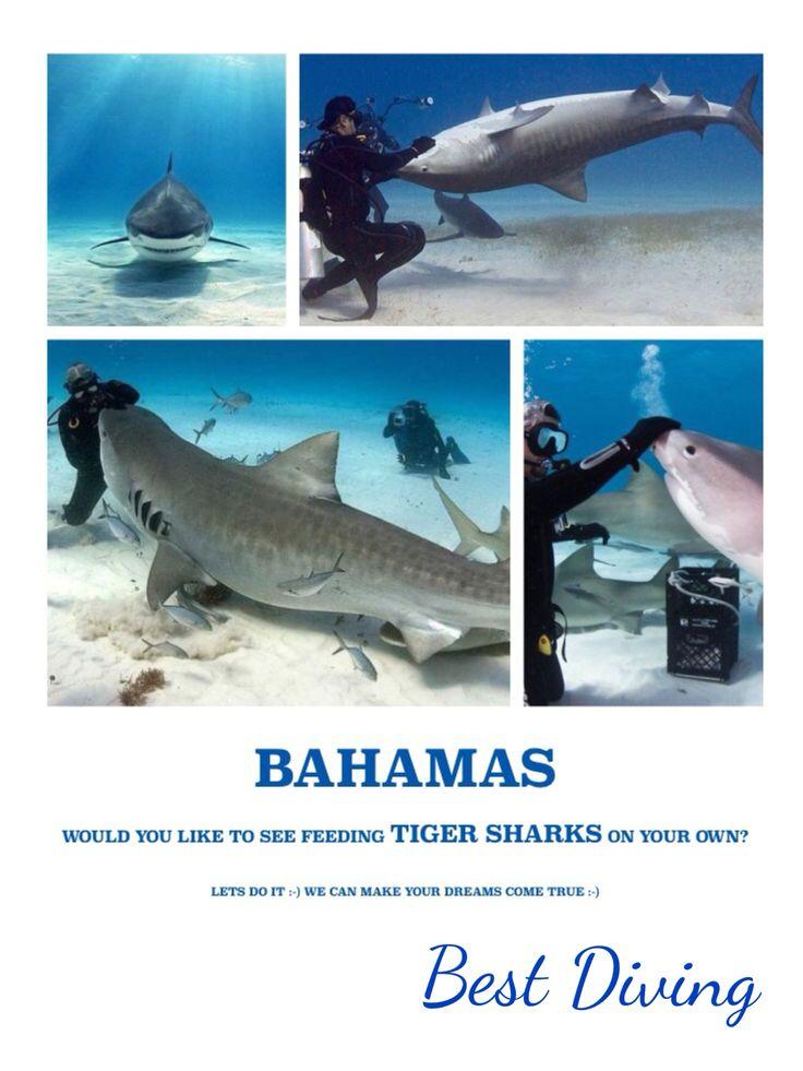 For more info bestdiving@yahoo.com