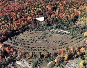 Abandoned drive-in movie theater. I miss these.