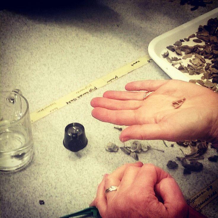 Workshop # vrijwilligers visbot herkennen #archeohotspots # archeologie #archeocommunity #groottuighuis #'s-Hertogenbosch