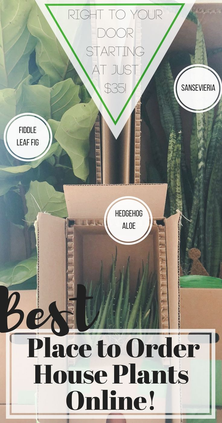 Where To Order Plants Online That Are Healthy And Inexpensive Real Fiffle Leaf Fig Sansevieria Hedgehog Aloe From Bloomscape Decorate With