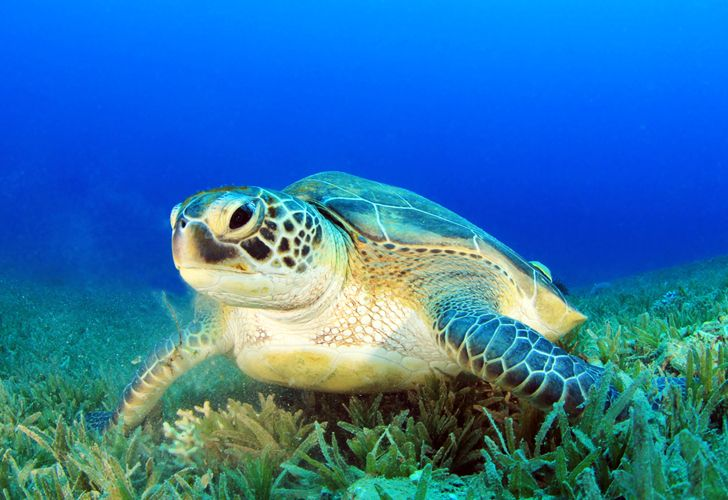 Researchers at Australia's University of Queensland have designed tiny swimsuits for sea turtles made from upcycled swim shirts - to aid in their research of the turtles' diets.