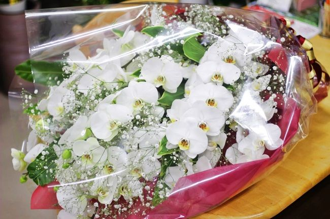 胡蝶蘭とかすみ草の花束