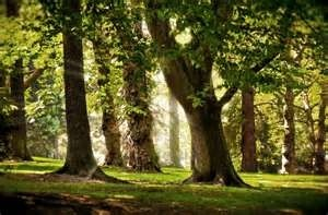 Woody is the last of the fragrance categories, as the name suggests, the fragrances are taken from trees.