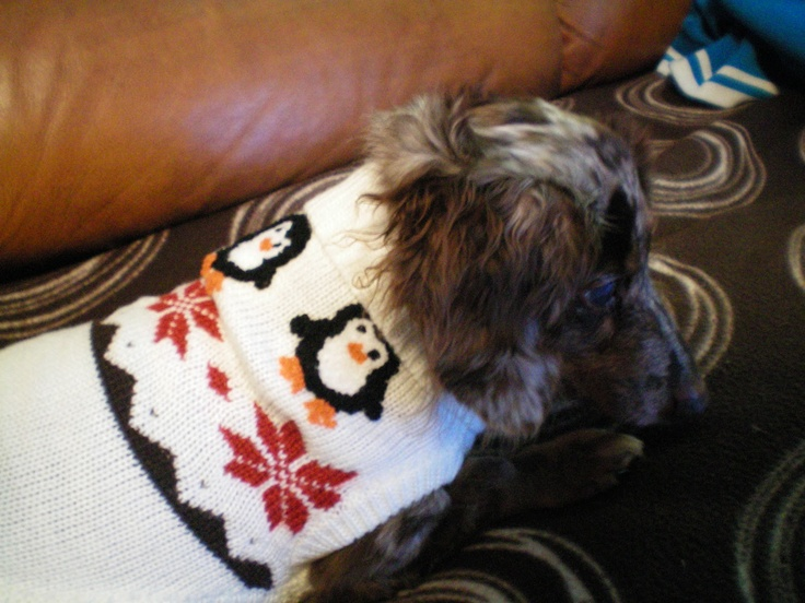 """Maxine's X-mas Sweater 2 StonefishSays - """"The Cookie Jar Marketer"""""""