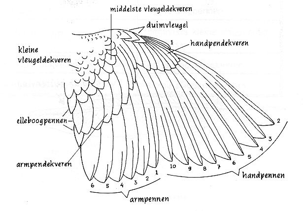 wing explanation