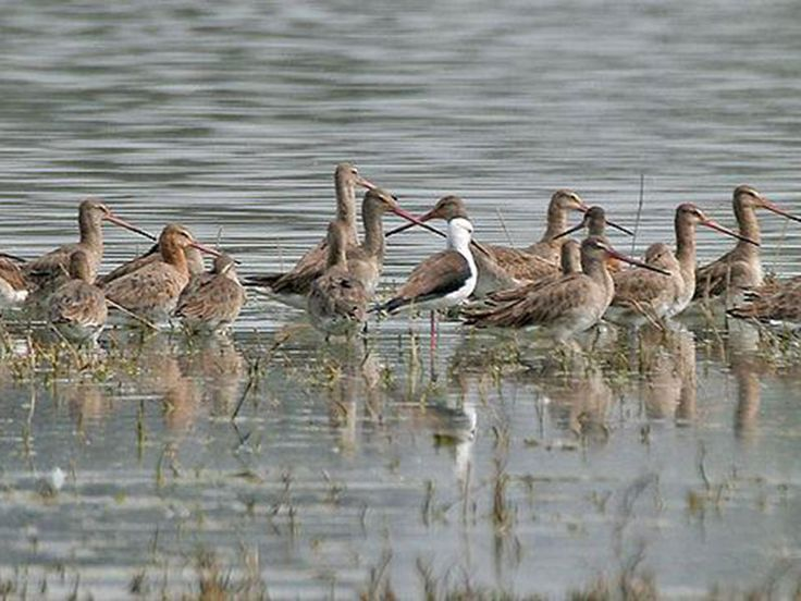 Sultanpur National Park and Bird Sanctuary: Sultanpur National Park is known worldwide for migratory birds and inhabitant birds seen here.