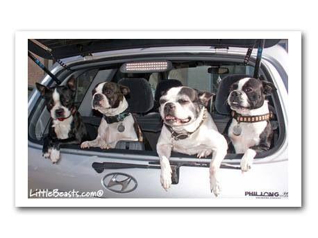 Joyride! Bosties love to ride in cars
