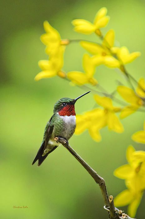 Beautiful summer hummer by christina rollo for Christina hummer
