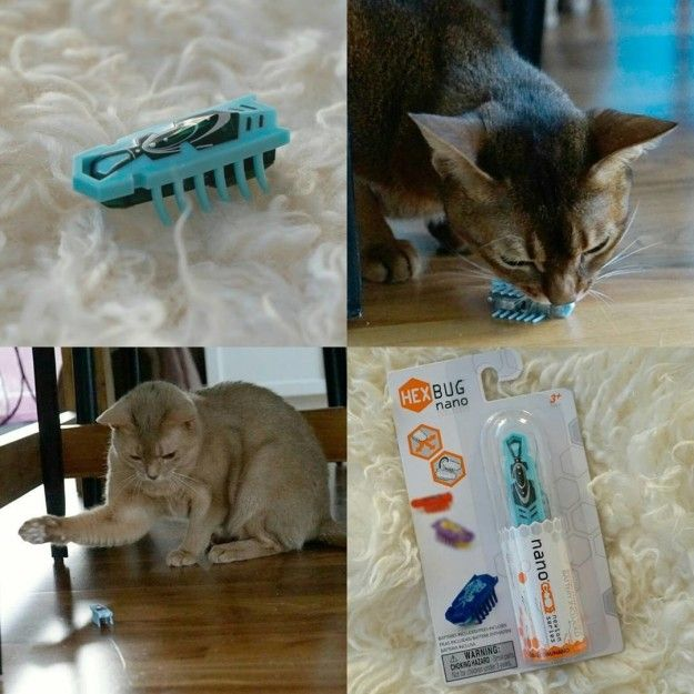 If You Love Playing With Your Cat, But Also Sometimes Need Them To  Entertain Themselves, Thereu0027s The